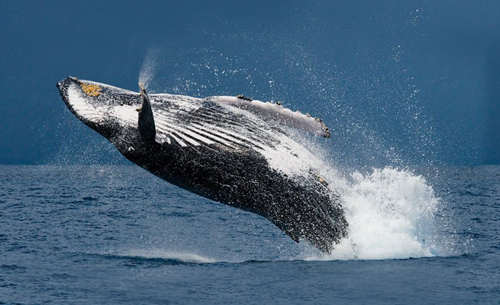 port-stjohns-whales_thumbnails