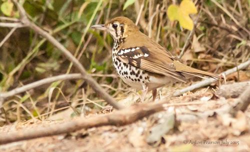 BirdBlogPost_thumbnail