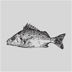 Umngazi Logo